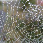 Aranha, a Tecelã do Universo