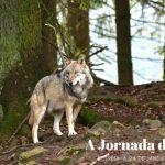 A Jornada do Lobo